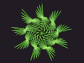 9-fold polyspiral design at 177 degrees